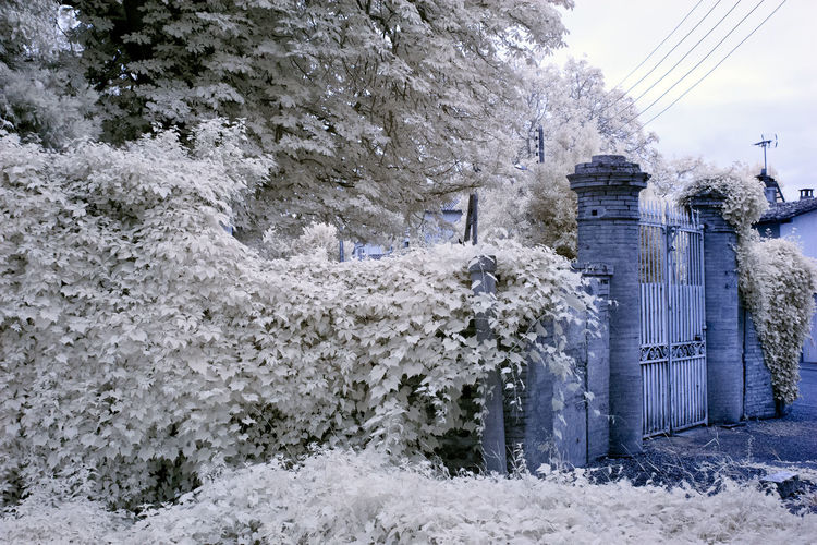 Snow covered plants by trees against sky