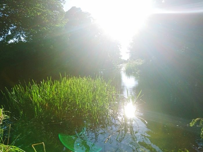 Mildenhall Riverside Peaceful Relax First Eyeem Photo 43 Golden Moments Reeds Water Light Suffolk Timeout Trees Green Summer16 Summertime Summer2016 Hidden Gems