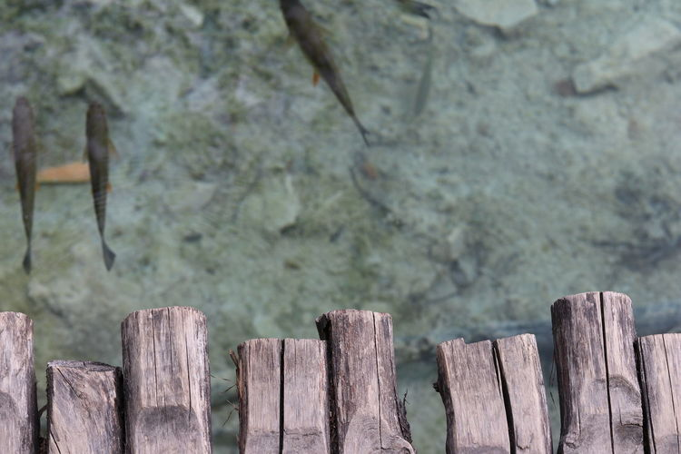 Close-up of wooden posts