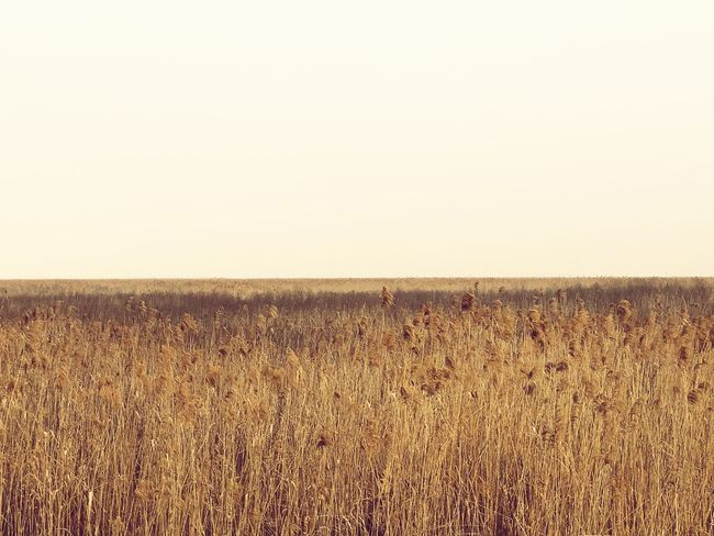 Field Nature Landscape Tranquil Scene Tranquility Horizon Over Land Beauty In Nature