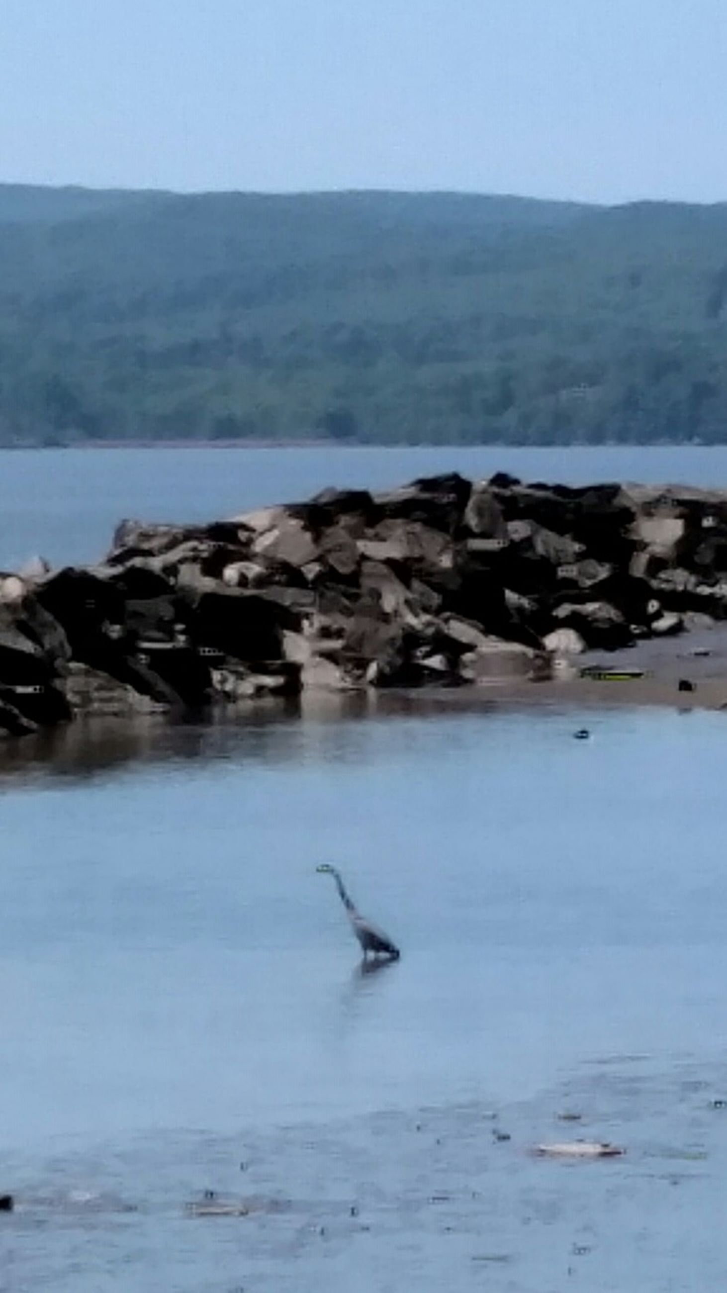 animal themes, water, bird, animals in the wild, wildlife, lake, tranquility, tranquil scene, nature, scenics, sea, beauty in nature, seagull, mountain, waterfront, one animal, rock - object, clear sky, idyllic