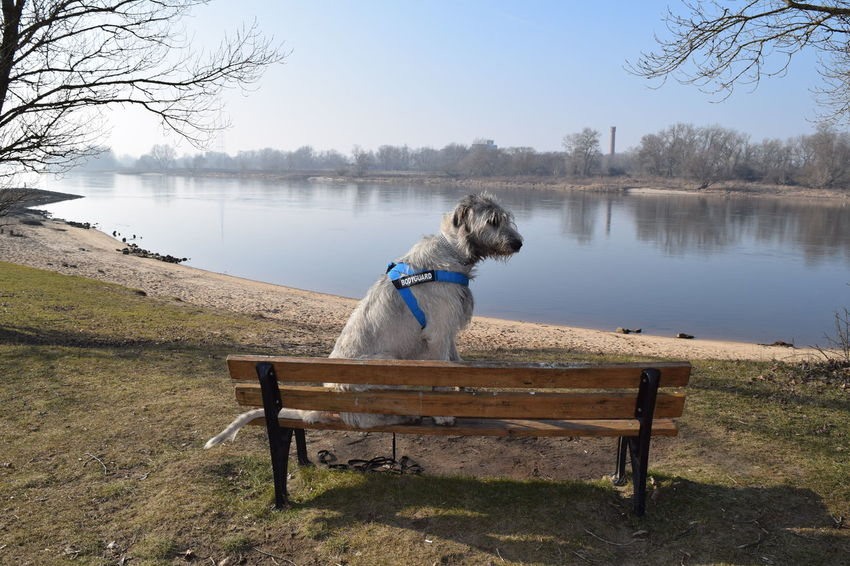 At The River Elbe Herrenkrugpark Water Nature Reflection Tranquility Outdoors Beauty In Nature Sky Sunlight Portrait How Is The Weather Today? Winter 2017 Take A Walk In The Park February 2017 Dogslife Irish Wolfhound Cearnaigh Dog Of The Day Dogs Of EyeEm Dogwalk Dog Animal Themes Domestic Animals