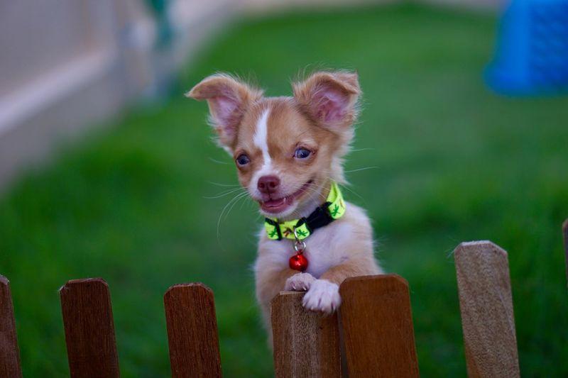 Mammal One Animal Pets Domestic Animal Themes Domestic Animals Canine Dog Portrait