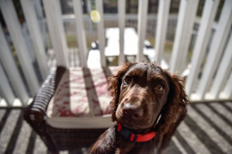 High angle view of brown dog at porch on sunny day