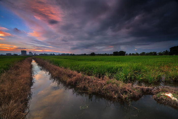 cloudy sunset over the river Penang Malaysia TourismMalaysia Natgeotravel Natgeoasia Nikon NikonAsia D750 Travel Flower Cloud - Sky Agriculture Water Freshness Sunset Field Crop  Nature Landscape Beauty In Nature Reflection Rural Scene Outdoors Beauty Sky Scenics Food Low Section No People EyeEmNewHere