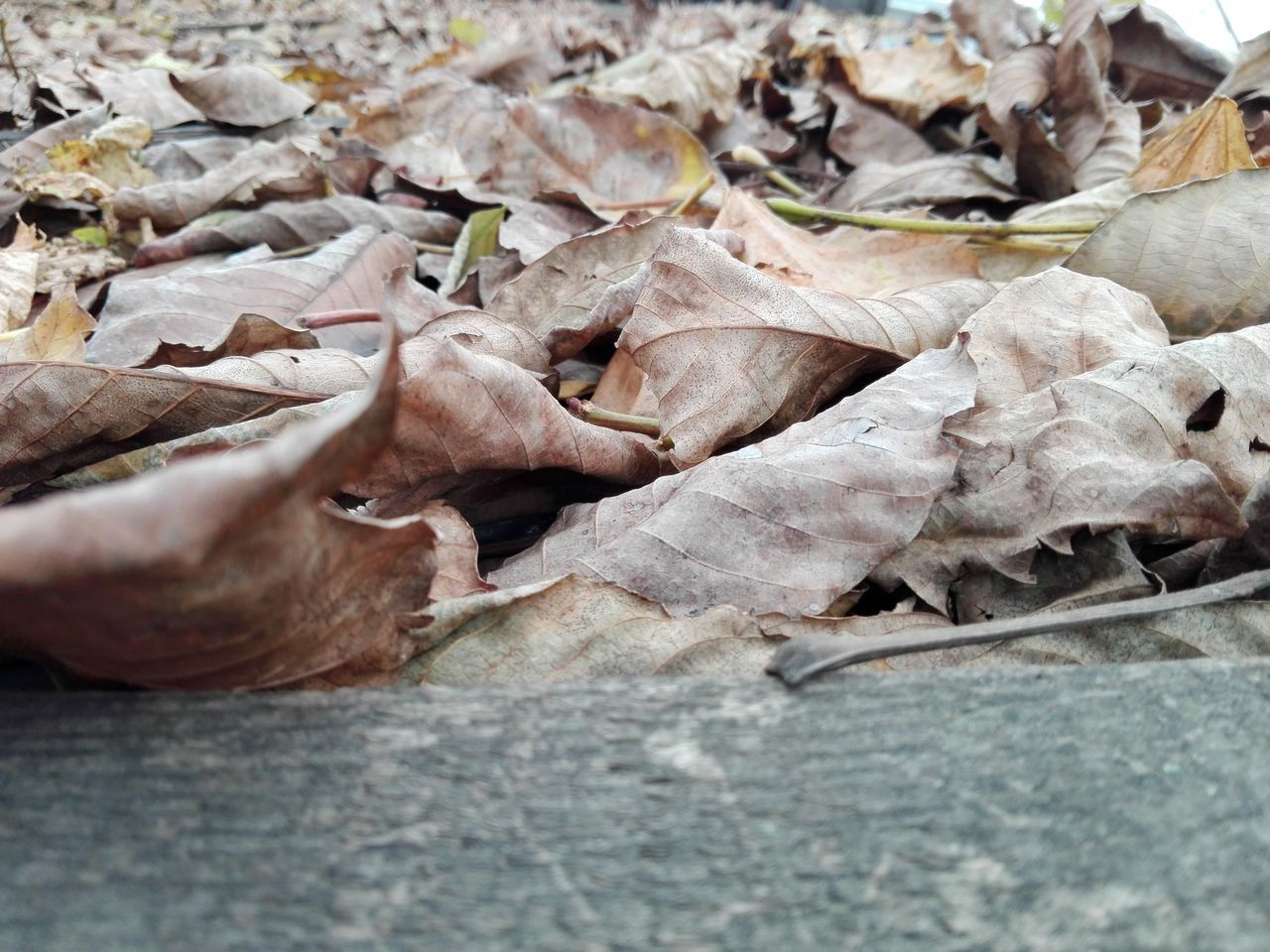 leaf, dry, no people, change, close-up, nature, autumn, day, fragility, outdoors, food, freshness