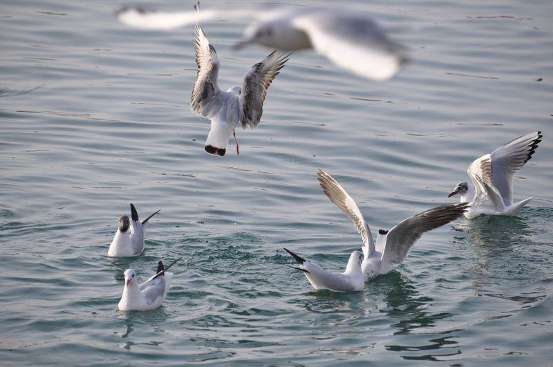 Birds in rippled water