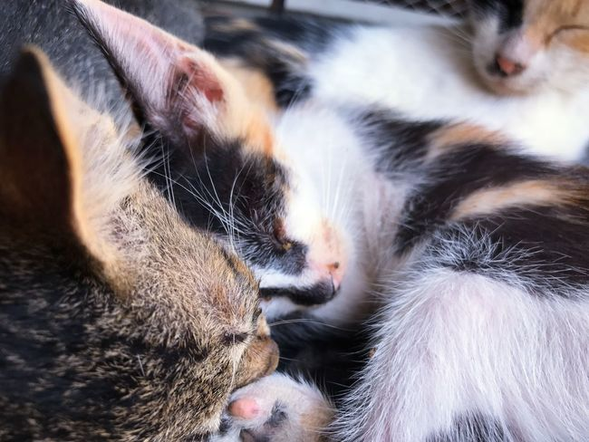 Day Domestic Animals No People Domestic Cat Pets Feline Animal Themes Mammal Cat Eyes Closed  Sleeping Whisker One Animal Close-up Indoors  Kitten EyeEm Selects Pet Portraits