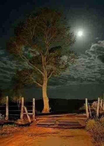 Awsome night Tree Plant Night Nature Water Illuminated No People Growth Land Outdoors Spooky Absence Beauty In Nature Tranquility Architecture Mystery Sky Lake Forest Digital Composite