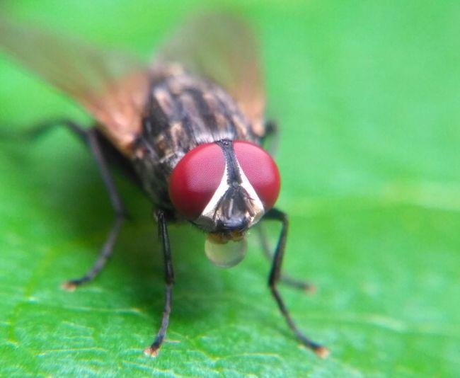 flies One