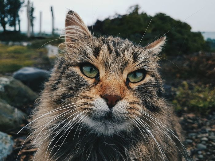 Portrait of cat sitting at yard
