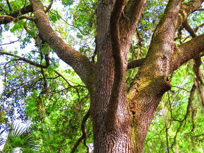 Close-up of high tree Tree Branch Forest Tree Trunk Full Frame Backgrounds Leaf Sky Close-up Green Color