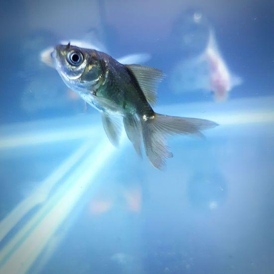 RIP Donald One Animal Fish Close-up No People Animal Themes Nature Catch Of Fish Day Goldfish Goldfish In Water Goldfish Tank EyeEmNewHere First Eyeem Photo Outdoors First Eyeem Photo