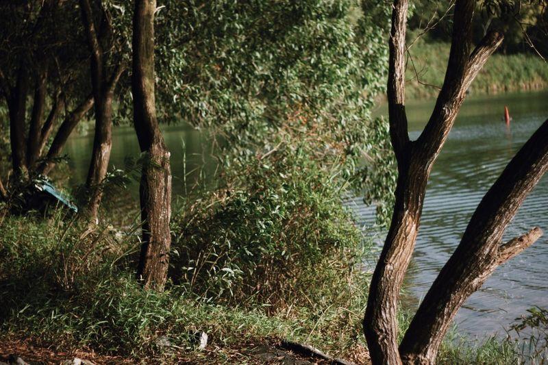 Tree growing in lake