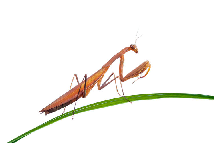 Close-up of insect against white background