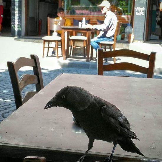 Karganın akşam yemeği. Crow Dinner Karga Yemek