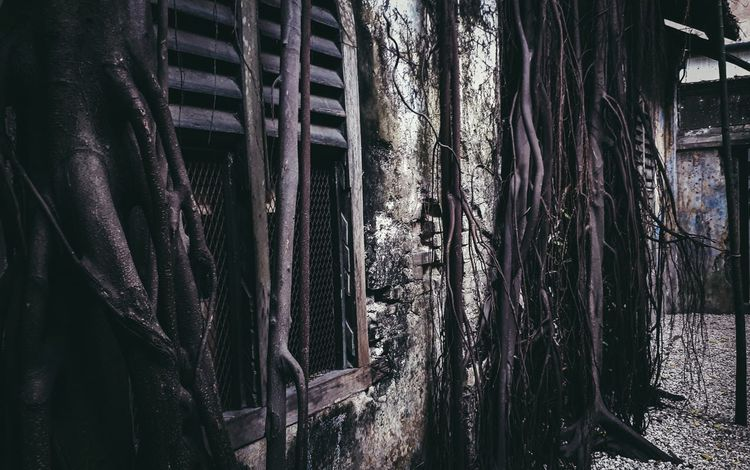 House of Roots and Twigs... Window No People Architecture Brick Wall Wall Landscape Investing In Quality Of Life The Week On EyeEm EyeEmNewHere Backgrounds Hanging Decorations Twigs And Branches Twigs Branch Nature Plant Tree Tree Trunk Roots And Branches Haunted House Haunted Places Haunted Mansion Antique House Old House