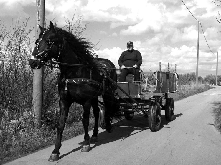 Horse Southitaly Monochrome Blackandwhite Streetphoto_bw Nature My Country In A Photo