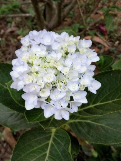 Springtime White Color Close-up Flower Blossom