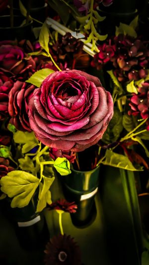 One last magnificent flower. Flowers Flowerporn Hdr Edit Hdr_gallery Getting Inspired Eye4photography  EyeEm Nature Lover Popart Kunst Popular Photos Time for one last cup of coffee.