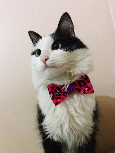 Feline Moda Fasion MynameisMimi (null)Cat Eyes Baby ❤ Beatiful Nature Corbatin