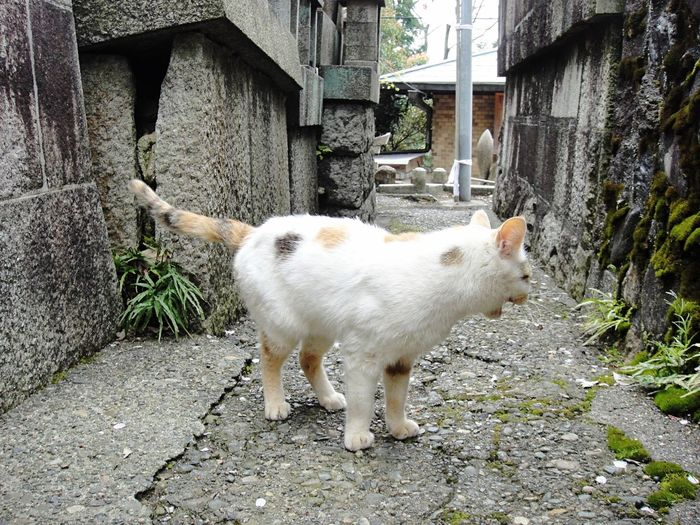 cat🐈 Domestic Animals Animal Themes Mammal Livestock Young Animal No People Pets Outdoors Day Kid Goat Nature Architecture