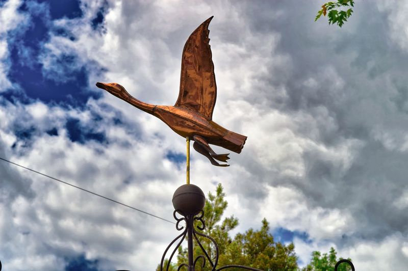 Low Angle View Sky Cloud - Sky Nature Day No People Animal Animal Themes Tree Bird Plant Representation Outdoors One Animal Flying Vertebrate Animals In The Wild Animal Wildlife Animal Representation Spread Wings Weathervane