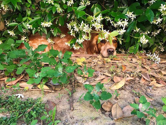 Whisky Epagneul Breton Leaf Plant Part Mammal Animal Vertebrate Animal Themes One Animal