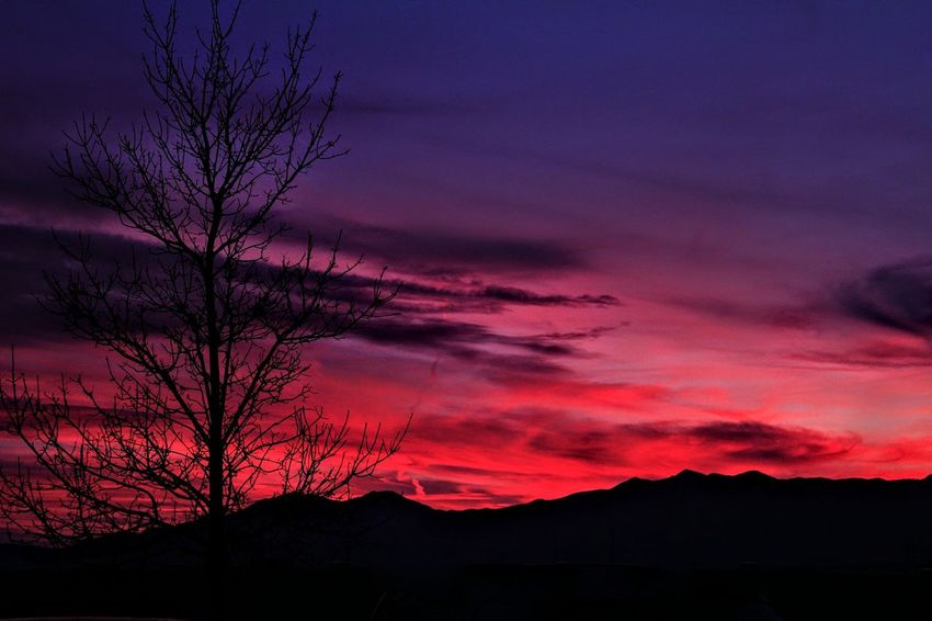 West Jordan sunset, Utah...12/02/2017. Sunset Tree Dramatic Sky Silhouette Nature Environment Sky Landscape Scenics Beauty In Nature Outdoors No People Multi Colored Tranquility Mountain Rural Scene Night Beauty Power In Nature