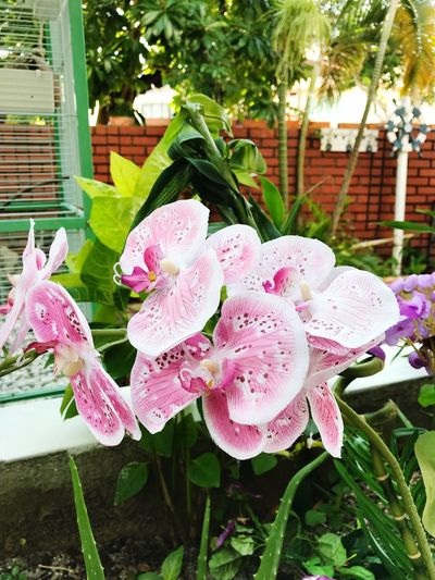 Beauty In Nature Flower Growth No People Nature Plant Pink Color Beauty In Nature Day Outdoors Petal Close-up Leaf Fragility Flower Head Freshness