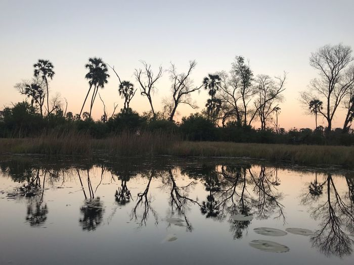 Reflections in the Okavango Delta Reflections In The Water Tree Sky Water Plant Reflection Lake Nature Beauty In Nature Tranquility Scenics - Nature No People Tranquil Scene Sunset Silhouette Waterfront Outdoors Reflection Lake