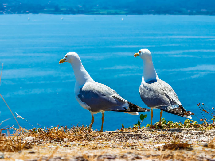 Elba Island Beautiful Seascape Scenarios, Italy Animal Animal Themes Animal Wildlife Animals In The Wild Beach Beauty In Nature Bird Day Group Of Animals Land Nature No People Sea Seagull Selective Focus Two Animals Vertebrate Water White Color
