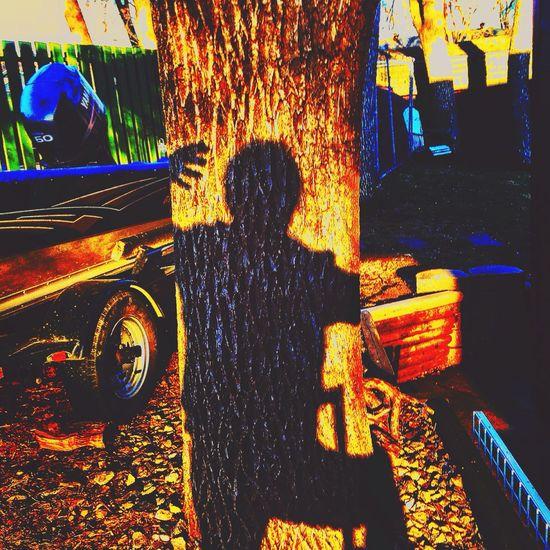Verticle Shade Nature Mode Of Transport Outdoors Sillouette Sunset #sun #clouds #skylovers #sky #nature #beautifulinnature #naturalbeauty #photography #landscape Tree Trunk Yard Art Climbing Treeclimbing EyeEmNewHere
