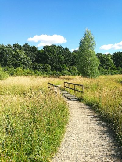 Afternoon walk Sunny Day The Great Outdoors The Way Forward Sky Path Countryside Footpath Footbridge Tranquil Scene Grass Long Grass Tree Blue Sky Beauty In Nature Rural Scene No People Outdoors Idyllic Grassy Empty Cambridgeshire Romantic Landscape Romantic Walk Still Life Fine Art