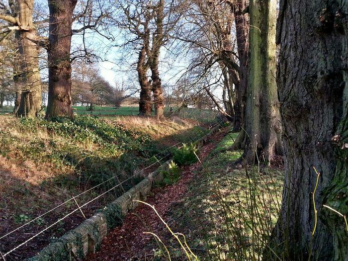 Blickling Hall Fence Trees Norfolk Uk