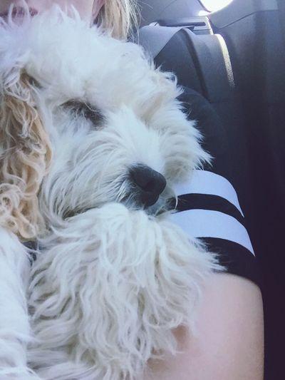 Puppy Beach Day Chill Cute Sunglasses Sea Car Journey