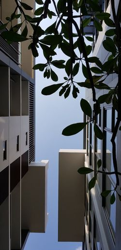 Low angle view of tree by building against sky