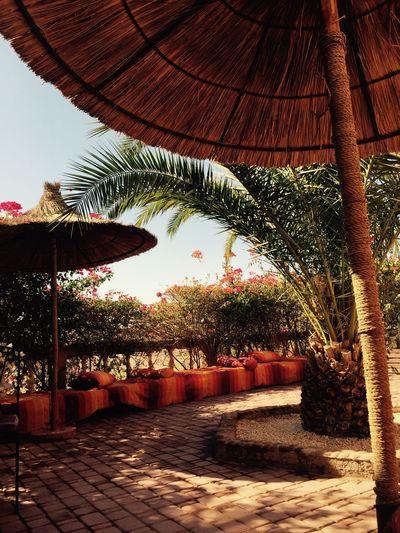 Kasbah Le Mirage September 2015 My Smartphone Life Taking Photos Flowers,Plants & Garden Marrakech