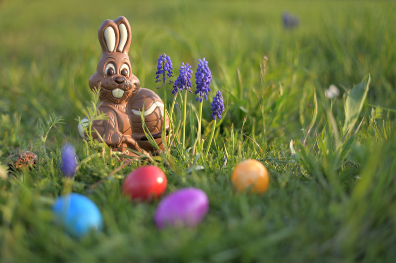 Easter Bunny with Easter Eggs in a Meadow Celebration Easter Easter Egg Grass Plant Selective Focus Flower Holiday Egg Flowering Plant Nature Representation Food Art And Craft No People Easter Bunny Field Beauty In Nature Purple Outdoors Springtime EyeEm Nature Lover Chocolate Painting Easter-Eggs Meadow Grape Hyacinth Animal Natural Religion And Tradition Nikon
