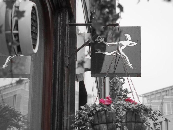 Pink Flowerporn Showcase: February Colour Splash Shop Signs