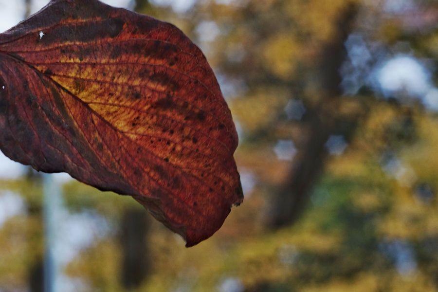 冬 Leaf Focus On Foreground Close-up Beauty In Nature Fragility Sonynex7 Oldlens Industar61 EyeEm Selects Tranquility EyeEm Gallery EyeEm Masterclass Capture The Moment Tranquil Scene EyeEm The Best Shots Bokeh Eyeemphoto Beauty In Nature Selective Focus