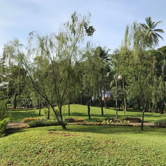 Driaz & Cancan, At Tabebuya Park, Jagakarsa - South Jakarta. Playdate By ITag A Place By ITag City Park By ITag View By ITag Nature By ITag