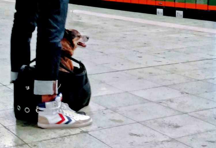 Dog Dog In A Bag Legs Train Station Waiting For A Train Best Friends Let's Go. Together. Minimalism Animal Themes Animals Companion Dog