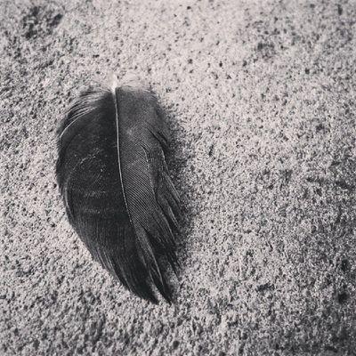Isolated MatembeziNai Wwim8 @SafaricomLTD Bnw Minimalism Feather