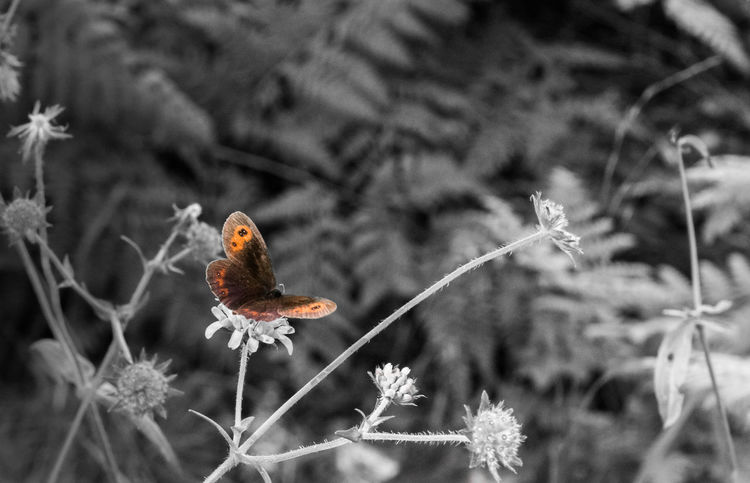 Negative WeekOnEyeEm Animal Themes Beauty In Nature Butterfly - Insect Close-up Focus On Foreground Nature Negative Effect Plant Selective Color
