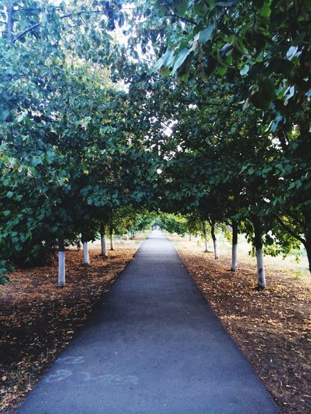 Азов любимыйгород зеленый деревья
