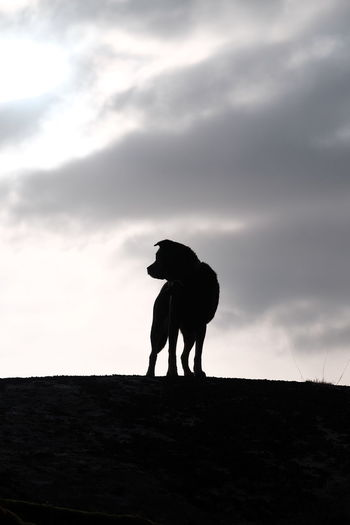 Silhouette Dog On Field