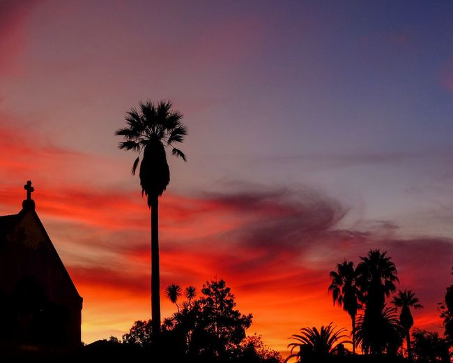 Sunset silhouette Sunset Sky Tree Silhouette Plant Cloud - Sky Orange Color Beauty In Nature Palm Tree Low Angle View Nature Scenics - Nature No People Dramatic Sky Tropical Climate Architecture Tranquility Growth Built Structure