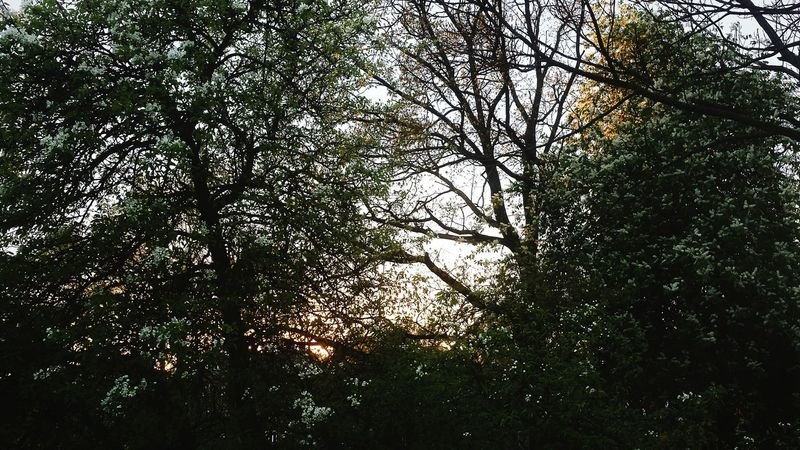 New At This Beauty In Nature Sun, Sunset, Sunshine, My Life Trees And Sky Beautiful Nature New Sunset Beautiful Beautiful Day Nature Forest Forest, Trees, Grass, Greenery, Shrubs,