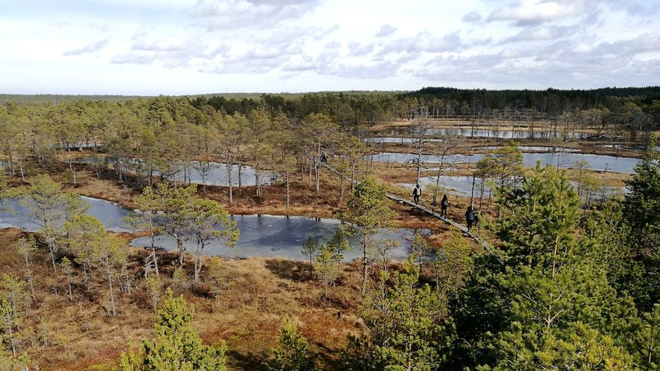 Leisure Activity Bog Water And Moss Estonian Nature Outdoor Activity Sunny Weather Swamp Viru Bog Outdoors Landscape Lost In The Landscape